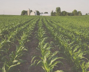 Agricultural Law Attorneys in Queen Creek, AZ